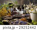 代わり フラワー 花の写真 29252442