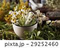 代わり フラワー 花の写真 29252460