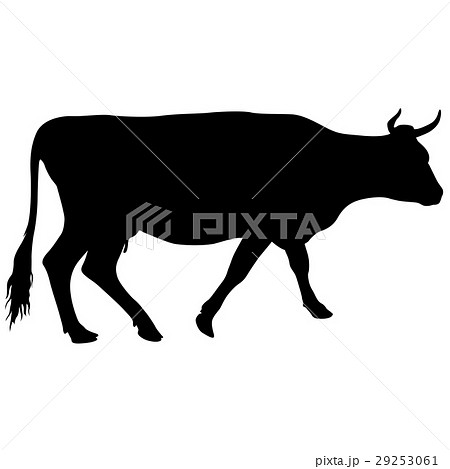 black silhouette of cash cow on white backgroundのイラスト素材