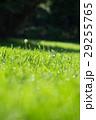 緑 芝 芝刈の写真 29255765