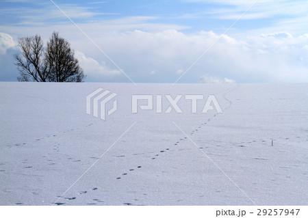 冬の美瑛 29257947