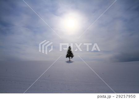 冬の美瑛 29257950