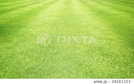 grass background Golf Courses green lawn 29261153