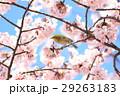 春イメージ 29263183