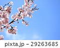 春イメージ 29263685