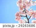 春イメージ 29263686