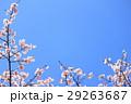 春イメージ 29263687