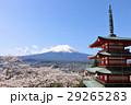 富士山 山 桜の写真 29265283