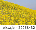 花 春 植物の写真 29268432