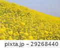 花 春 植物の写真 29268440