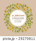 フラワー 花 ハーブのイラスト 29270811