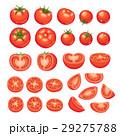 とまと トマト ベクタのイラスト 29275788