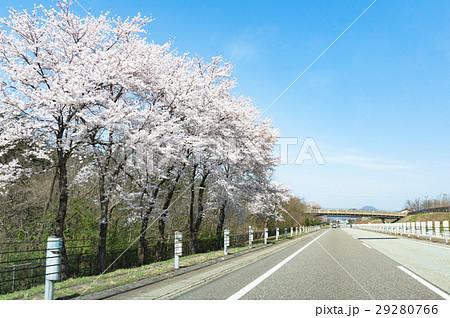 関越自動車道と桜 29280766