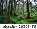 林 森 樹林の写真 29303456
