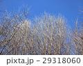 冬の空と木々 29318060