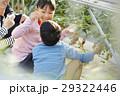 人物 子供 イチゴ狩りの写真 29322446