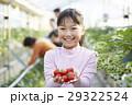 子供 女の子 イチゴの写真 29322524
