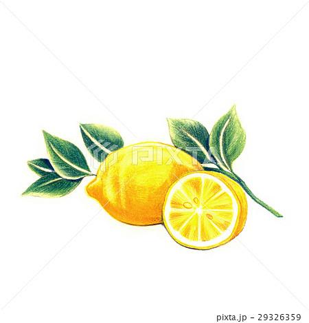 フレッシュ! レモン 29326359