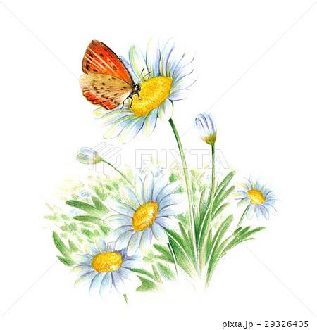 春の花とチョウ 29326405