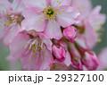 花 フラワー お花の写真 29327100