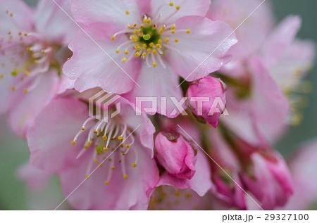 花 フラワー お花 29327100