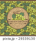 ブドウ グリーン 緑色のイラスト 29339130