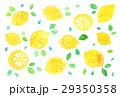 レモン 背景素材 レモン柄のイラスト 29350358