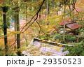 秋、紅葉の大興善寺ー佐賀県三養基郡基山町 29350523