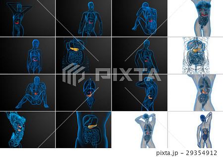 3d rendering medical  the gallblader and pancreas 29354912