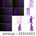 解剖学 胆汁の 器官のイラスト 29354922