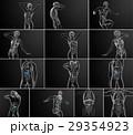 解剖学 胆汁の 器官のイラスト 29354923