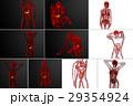 解剖学 胆汁の 器官のイラスト 29354924
