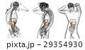 解剖学 虫えい 虫こぶのイラスト 29354930