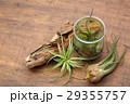 エアプランツ 観葉植物 チランジアの写真 29355757