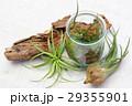 エアプランツ 観葉植物 チランジアの写真 29355901