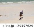 動物 ビーチ 浜辺の写真 29357629