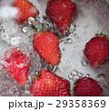 苺 ストロベリー 水道水の写真 29358369