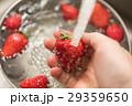 イチゴ 洗う 水道水の写真 29359650