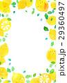 レモン レモン柄 柑橘類のイラスト 29360497