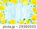 レモン レモン柄 模様のイラスト 29360503