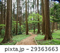 遊歩道 森林 公園の写真 29363663