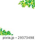 新緑 フレーム 29373498