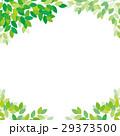 新緑 フレーム 29373500