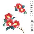 水彩画 植物 花のイラスト 29378309