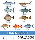 サカナ 魚 魚類のイラスト 29383229