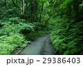 山道を走る風景 29386403