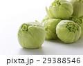 蕗の薹 蕗 山菜の写真 29388546