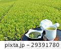 お茶 緑茶 新茶の写真 29391780