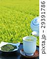 お茶 緑茶 新茶の写真 29391786