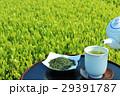 お茶 緑茶 新茶の写真 29391787